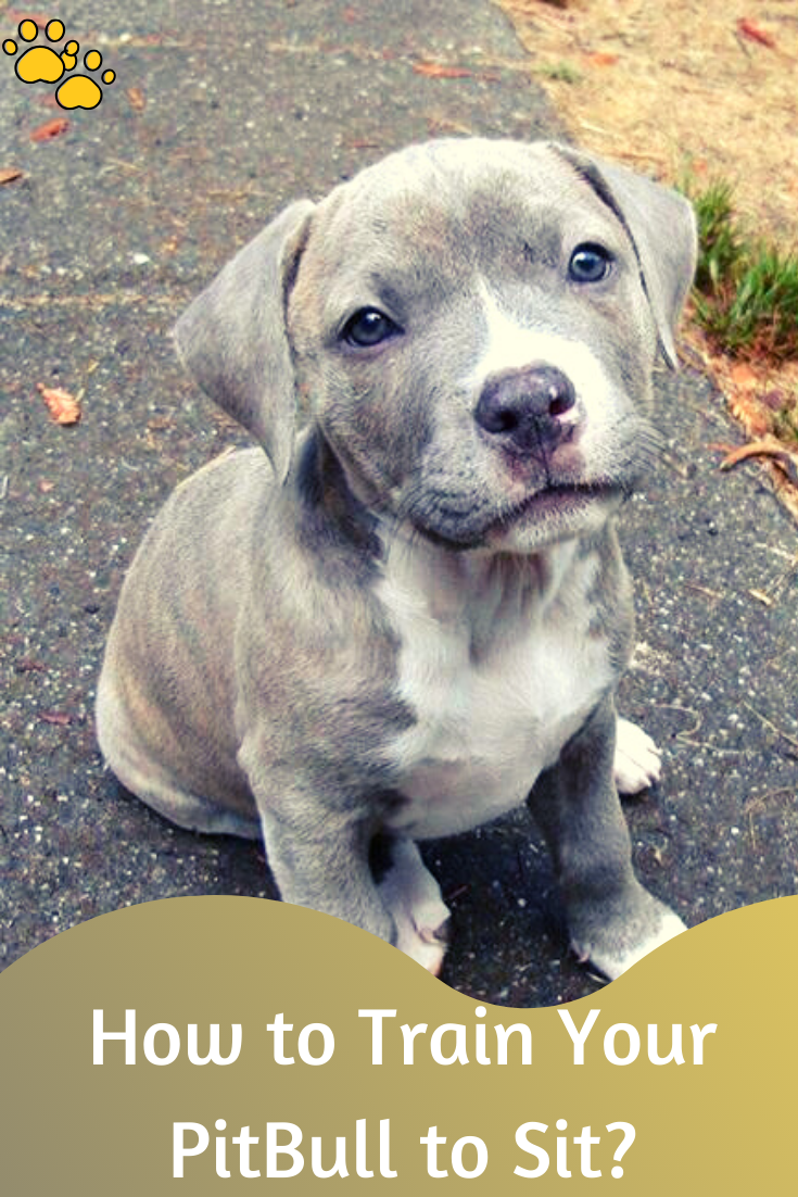 how to train your pit bull puppy to sit