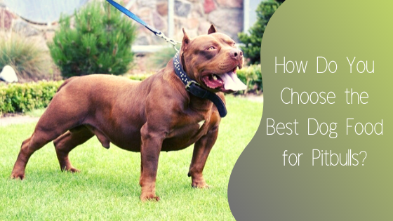 how do you choose the best dog food for pitbulls