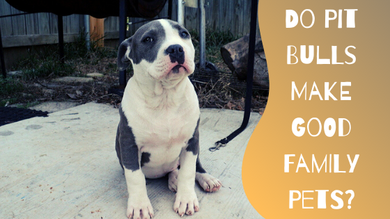 do pitbulls make good family pets