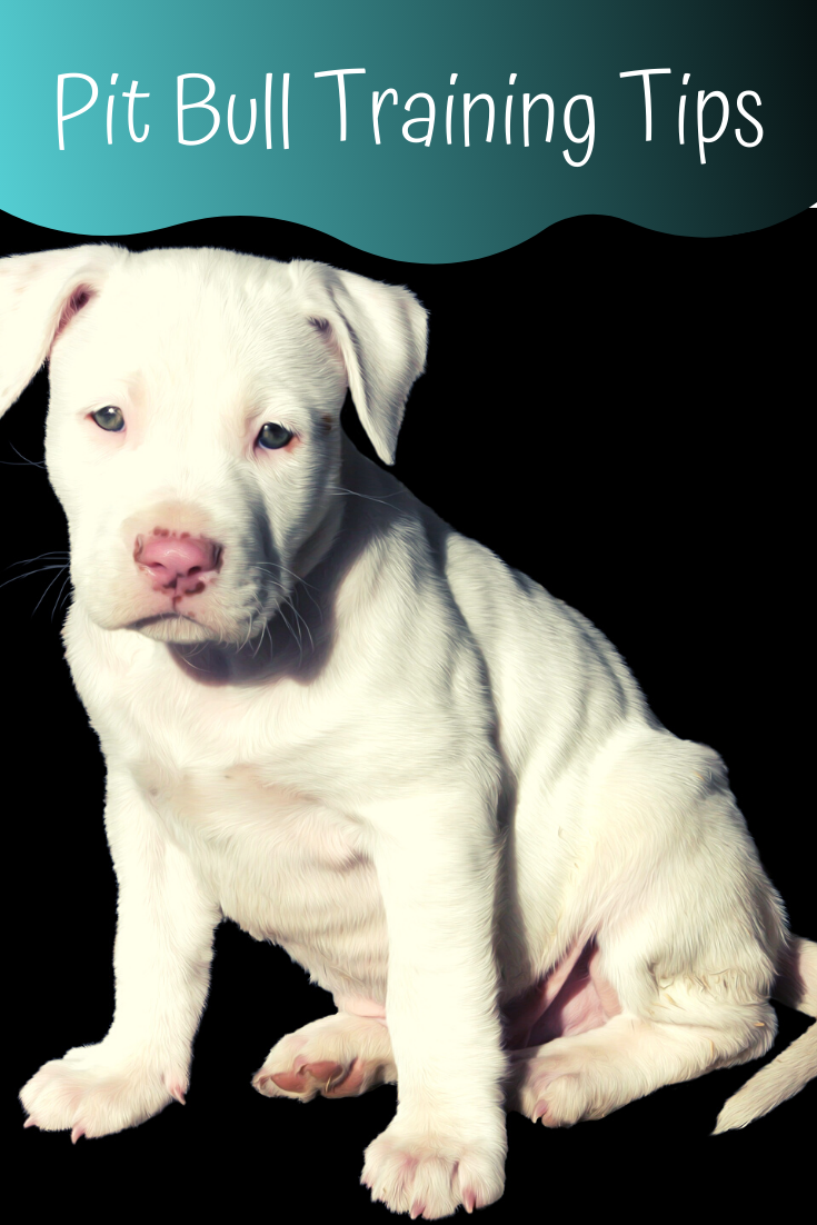 pit bull training tips