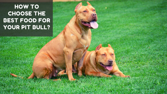 How to Choose the Best Food for Your Pit Bull