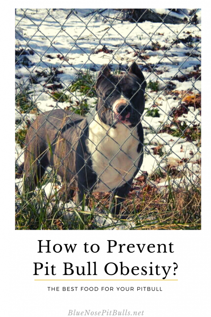 how to prevent pitbull obesity
